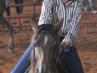 equine-05i3117