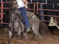 equine-05i3241